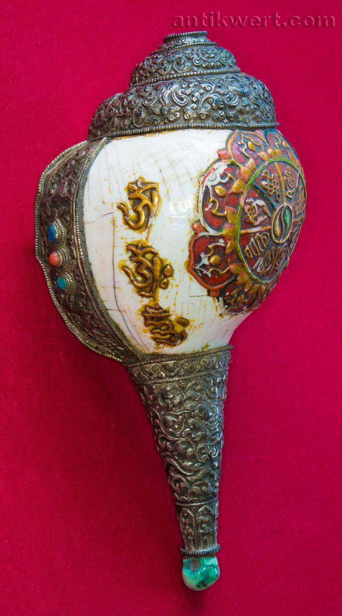 bild von Shankha-Muschelhorn-212 in laengsansicht
